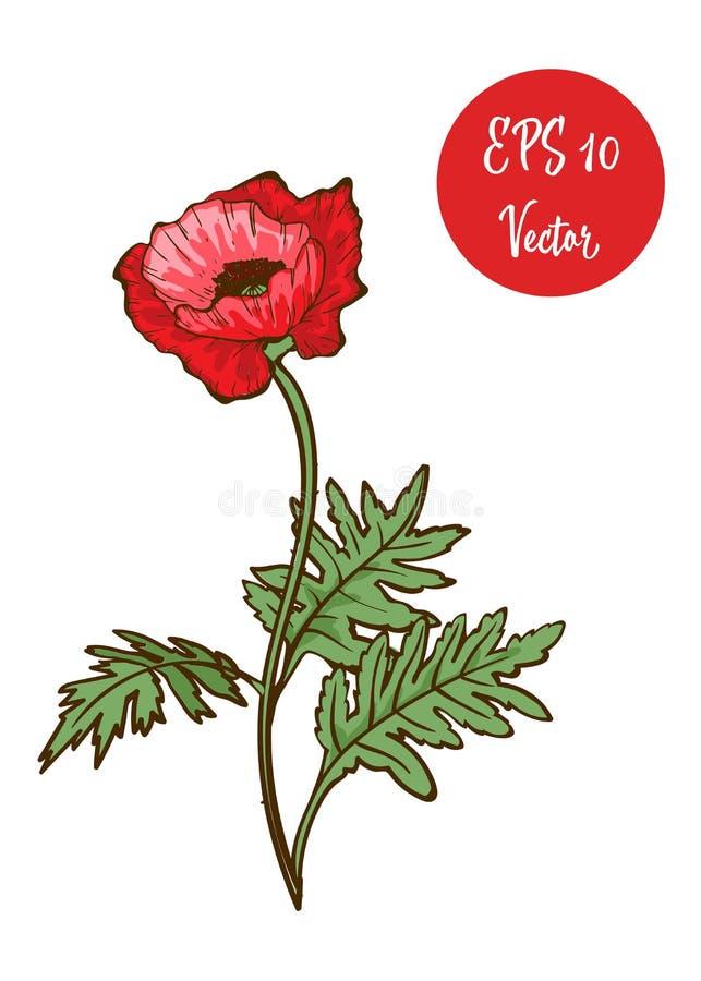 Choisissez l'illustration rouge de vecteur de fleur de pavot, beau pavot rouge sur la longue tige d'isolement sur le fond blanc illustration libre de droits