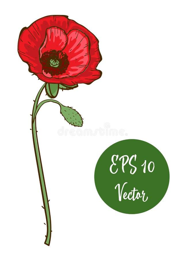 Choisissez l'illustration rouge de vecteur de fleur de pavot, beau pavot rouge sur la longue tige d'isolement sur le fond blanc illustration stock