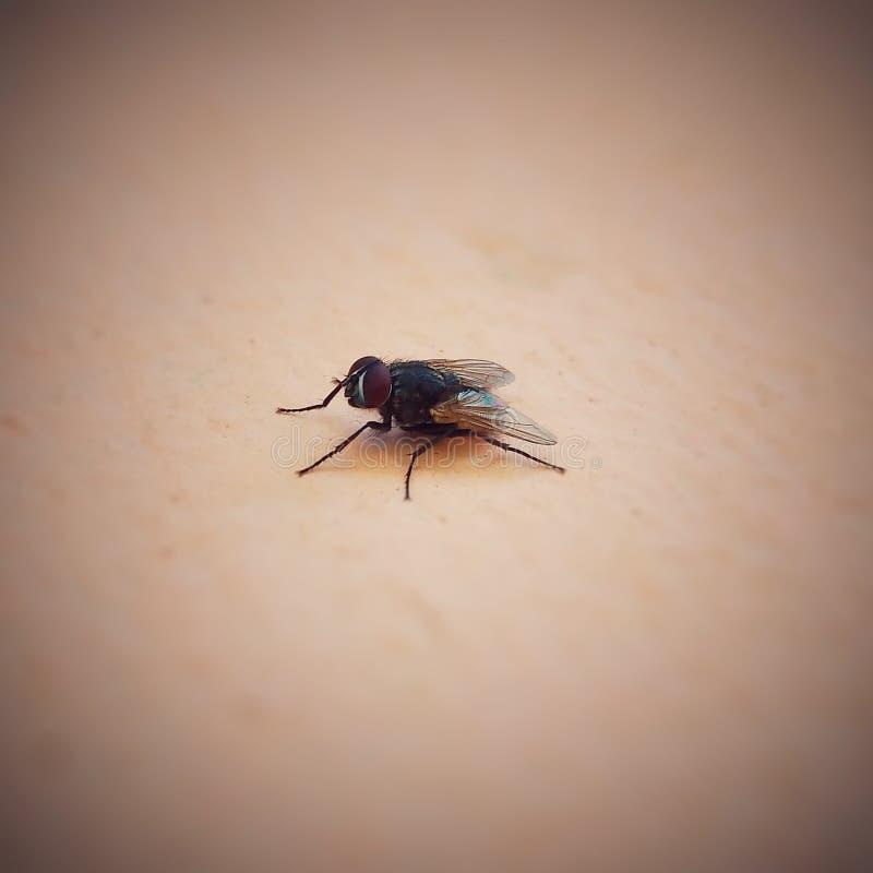 Choisissez la mouche photographie stock
