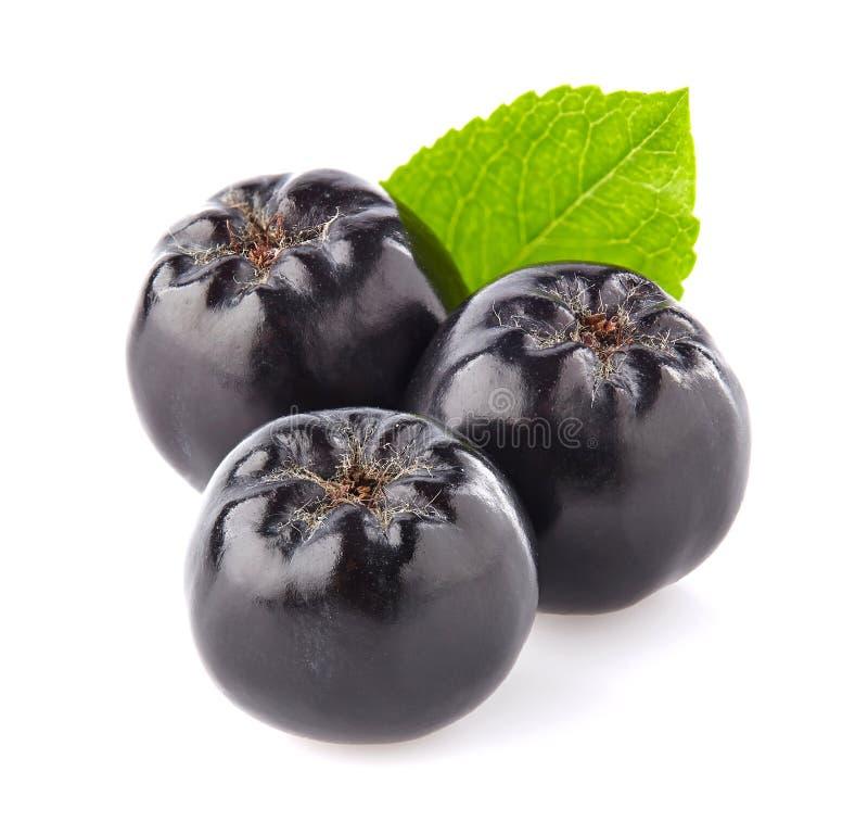 Chokeberry in closeup stock photos