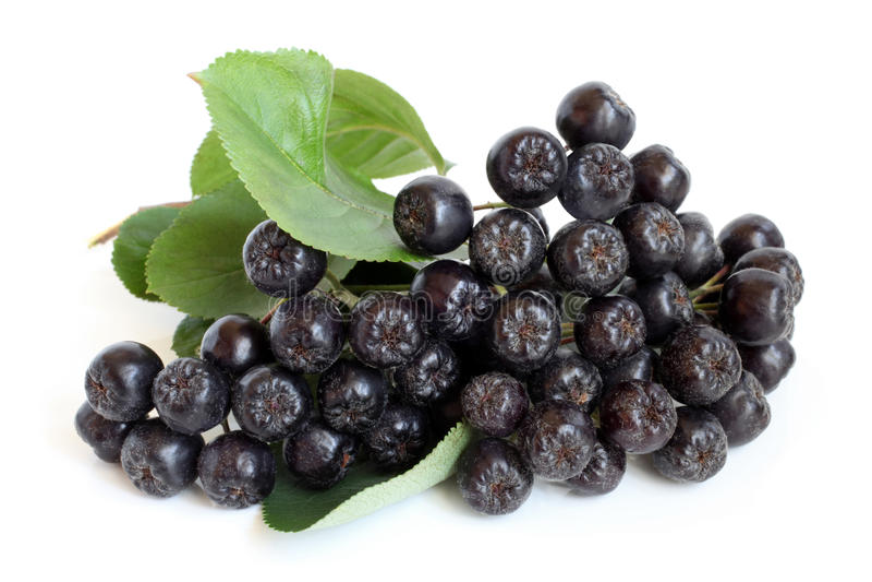 Chokeberry negro fotografía de archivo libre de regalías