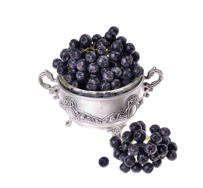 Chokeberry negro del aronia aislado fotos de archivo libres de regalías