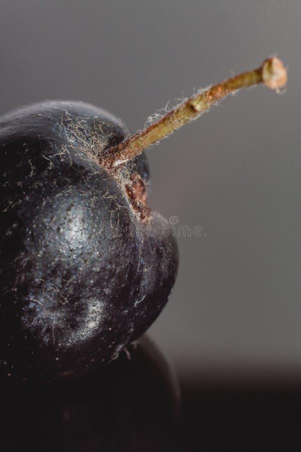 Chokeberry owoc w zbliżeniu fotografia royalty free