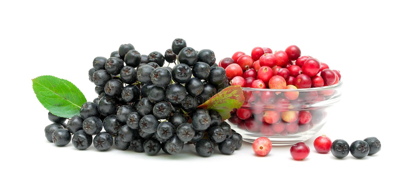 Chokeberry and ripe cranberries on a white background royalty free stock image