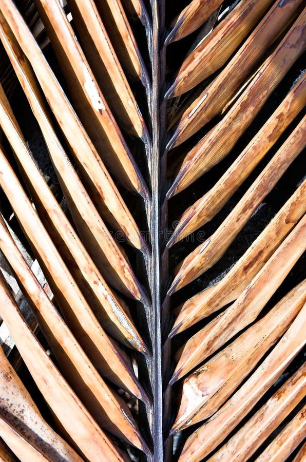 Download Choklad gömma i handflatan fotografering för bildbyråer. Bild av djungel - 516513
