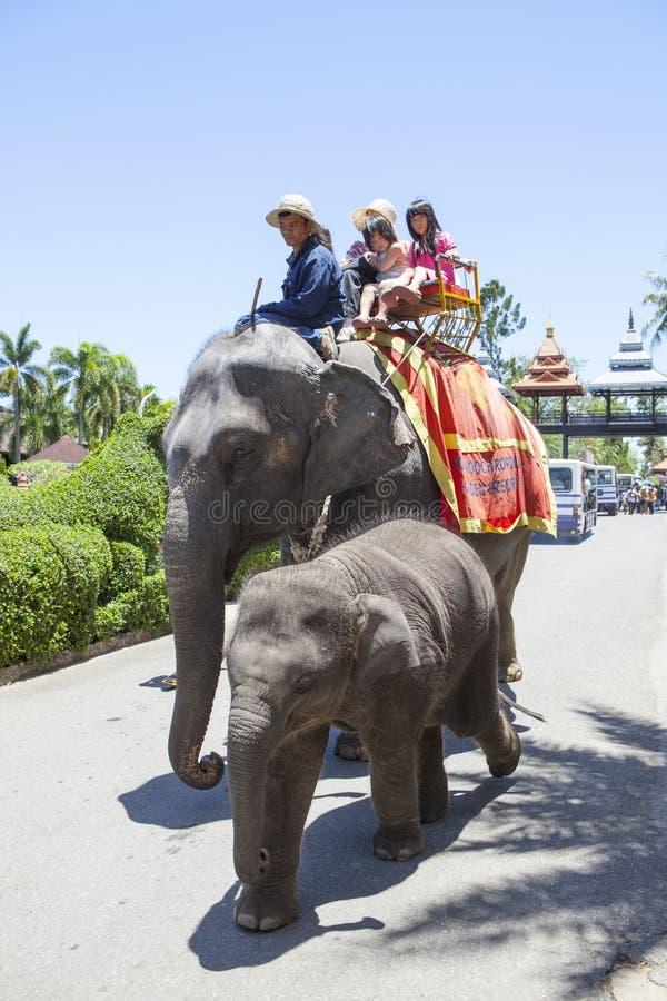 CHOLBURI TAJLANDIA - AUGUST11: dzieci i rodzinna jazda na ele obraz stock