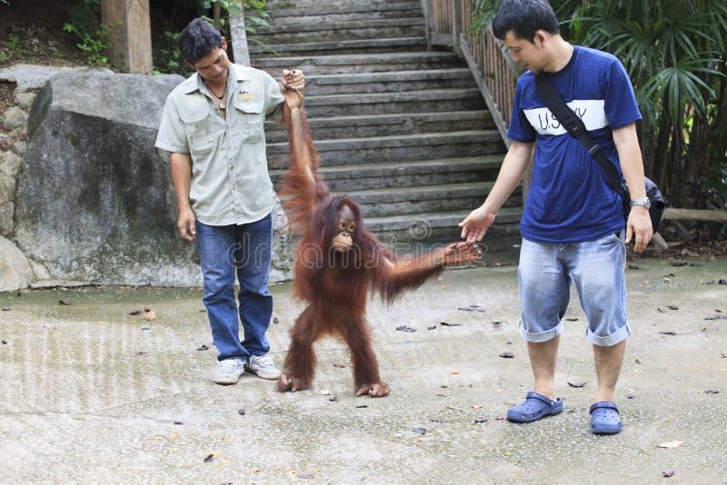CHOLBURI TAJLANDIA - JUNE13: unidenftify gościa bawić się z Bo obrazy royalty free