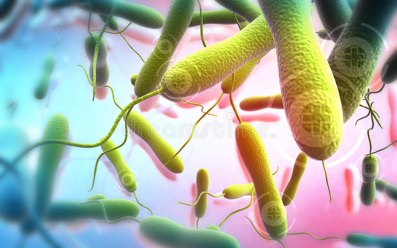 Cholera bacteria. Digital illustration of cholera bacteria in colour background royalty free stock images
