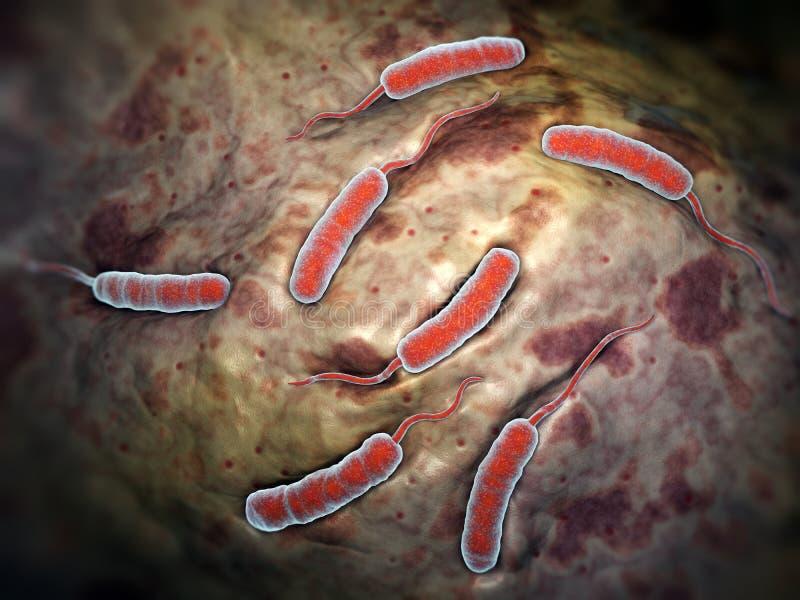 Choleraebacteriën royalty-vrije illustratie