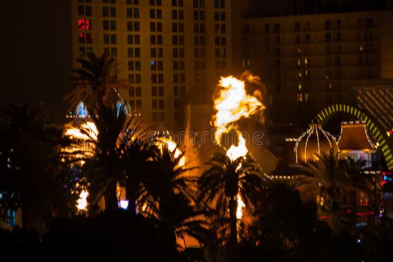 Cholernik w lasach Vegas fotografia royalty free