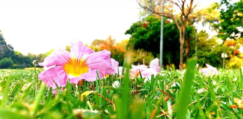 Chompupunthip zdjęcie royalty free