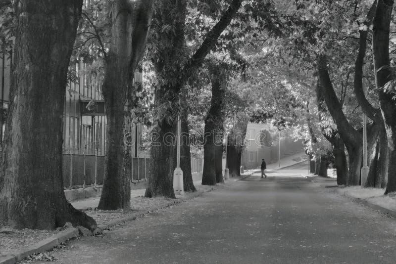 2016/09/24 - Chomutov,捷克共和国-在街道Premyslova的栗子胡同在有穿过街道的妇女的Chomutov市 免版税图库摄影