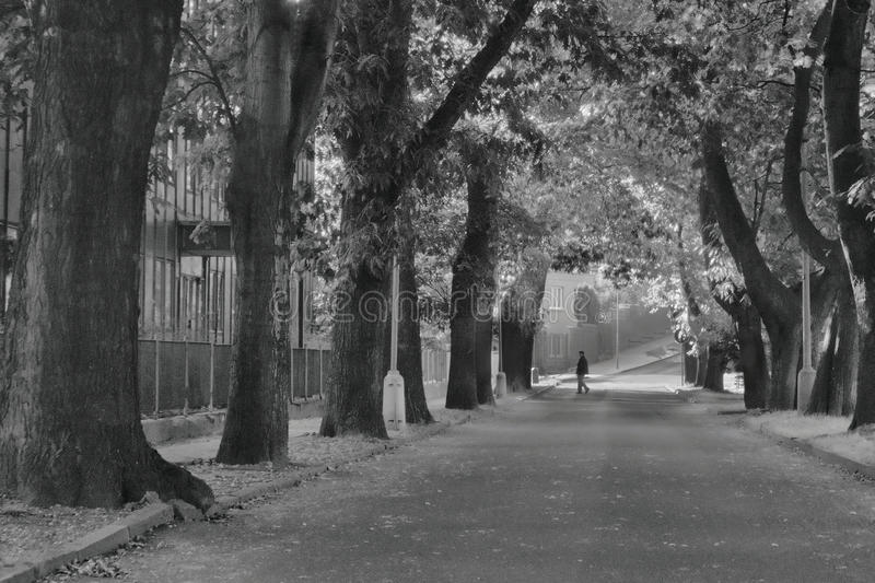 2016/09/24 - Chomutov, Czech republic - chestnut alley in the street Premyslova in Chomutov city with a woman crossing the street royalty free stock photography
