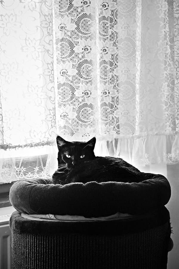 Chomutov, République Tchèque - 7 avril 2018 : le chat noir appelé Violka se repose sur le grand rouleau de éraflure près de la fe images libres de droits