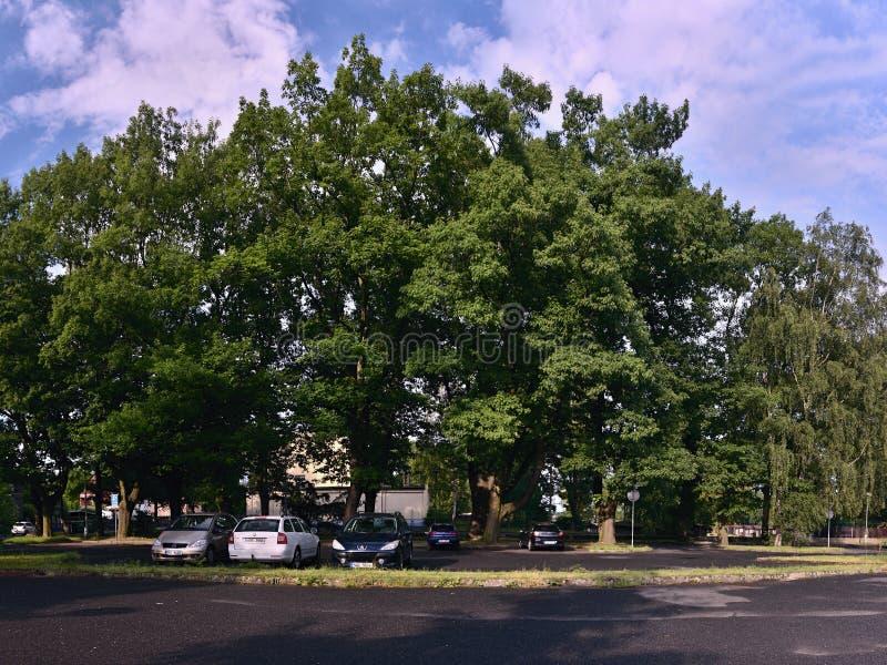 Chomutov Tjeckien - Juni 10, 2018: stora träd och bilar på parkeringsplatsen för turist- leda till sjön för Kamencove jezeroalun  royaltyfri foto