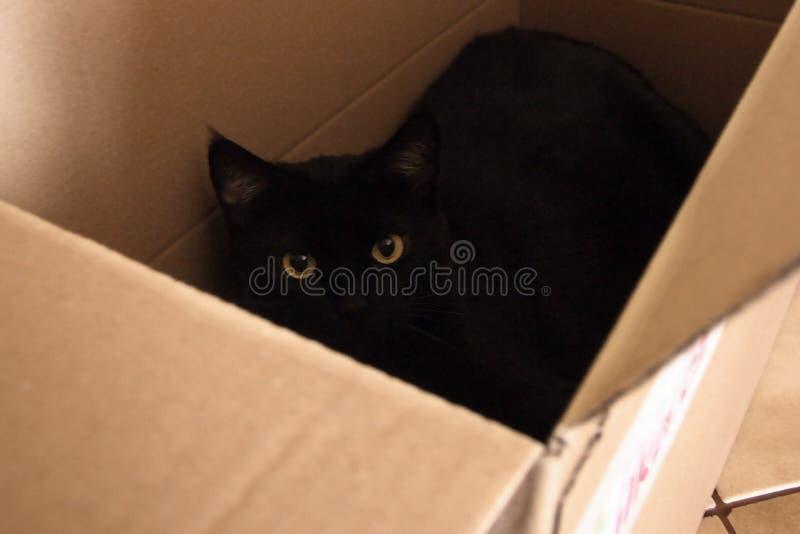 Chomutov, Tschechische Republik - 10. Juli 2017: Augen der schwarzen Katze im Kasten auf Boden lizenzfreie stockfotos