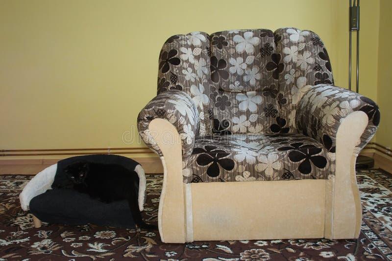 Chomutov, Tsjechische republiek - 30 December, 2018: één stoel voor mens en één stoel voor kat in woonkamer stock foto