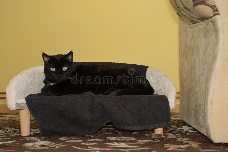 Chomutov, Tsjechische republiek - 30 December, 2018: zwarte kat Violka op haar stoel in woonkamer royalty-vrije stock fotografie