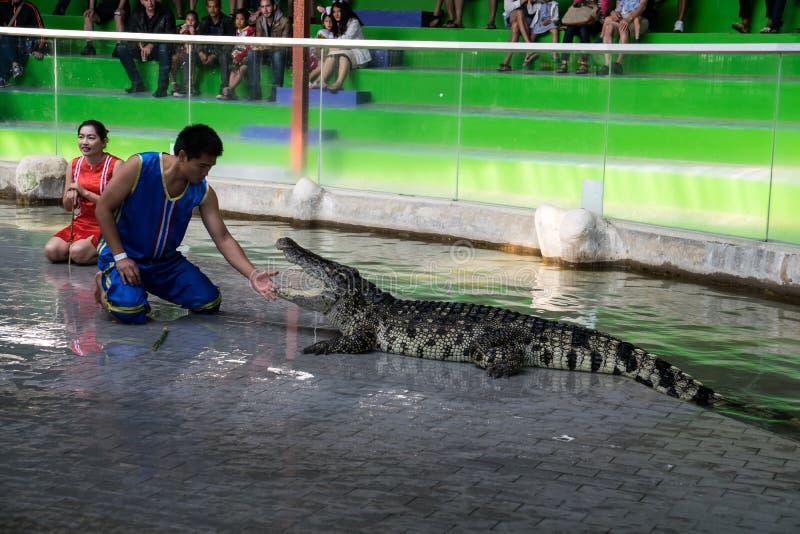 Chon Buri,泰国- 2015年1月1日:在crocodil的鳄鱼展示 免版税库存图片