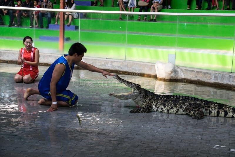 Chon Buri, THAILAND - 1. Januar 2015: Krokodilshow am crocodil stockfotografie
