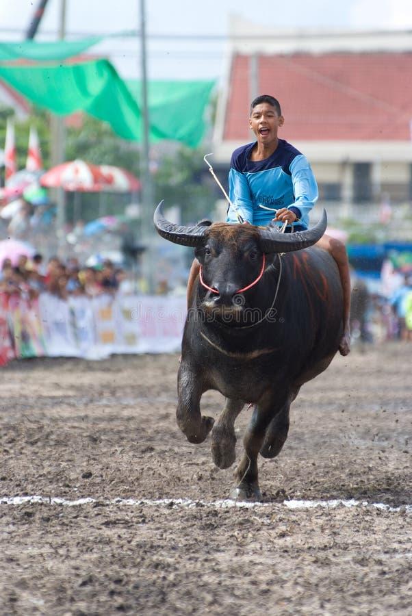 chonburi 2009 rocznych bawolich ras obrazy royalty free