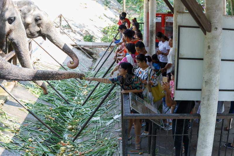 Chonburi/Tailândia - 15 de abril de 2018: Jovens que alimentam ao tronco do ` s do elefante no jardim zoológico aberto de Khao Kh fotografia de stock