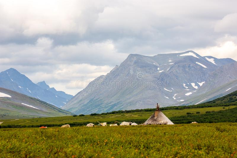 Chooms of nomadic reindeer herders. Chooms of the nomadic reindeer herders, Yamal, Russia royalty free stock photo