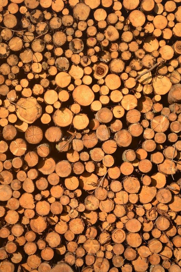 Choped деревянное вносит дальше текстуру в журнал стоковая фотография rf