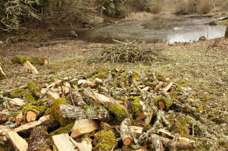 Download Firewood stock photo. Image of pond, water, firewood - 29919760