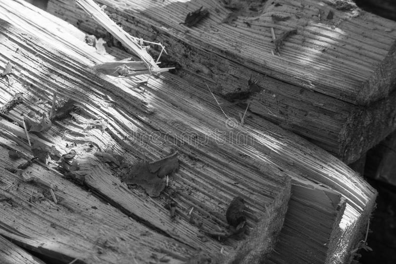 Chopped pine firewood close-up black-and-white stock photography