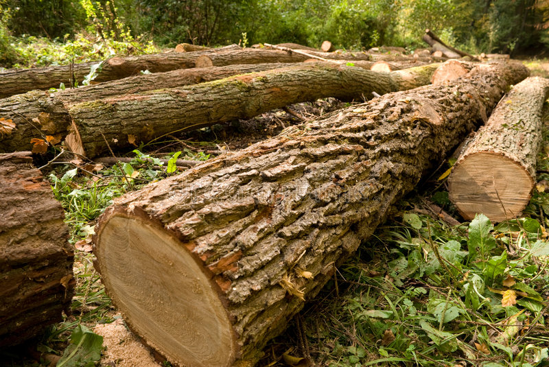 Chopped trees stock images