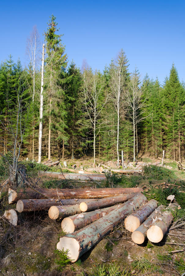 Download Chopped trees stock image. Image of country, destroy - 30551683