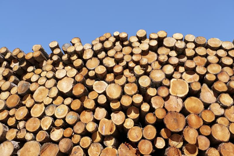 Chopped wood logs stacked in forest woodlands renewable green biomass energy summer sun Loch Lomond blue sky stock image