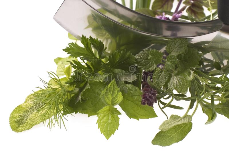 Chopping fresh herbs. stock photos