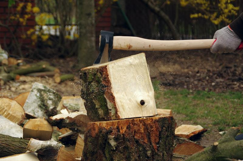 Chopping wood with axe. Chopping wood with an ax in his hand. Firewood is getting ready for winter. Dynamic view. The farm is self-sufficient royalty free stock photo