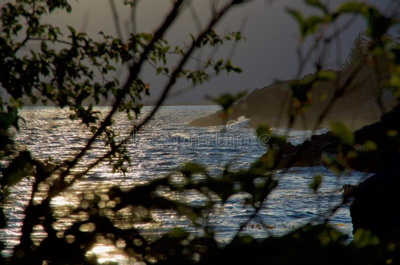 Choppy seas in evening light seen through branches of trees. On one of Bunsby Islands, British Columbia royalty free stock photos