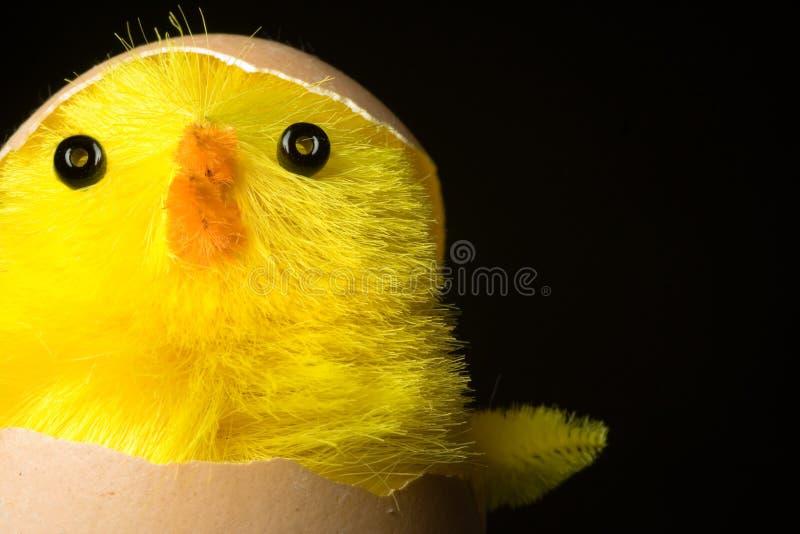 Choque da galinha de Easter fotos de stock