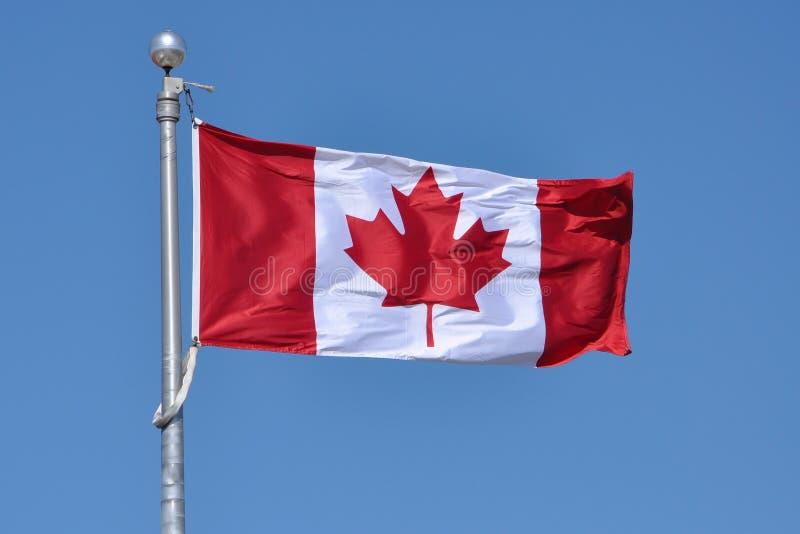 chorągwiany Canada obywatel obrazy stock