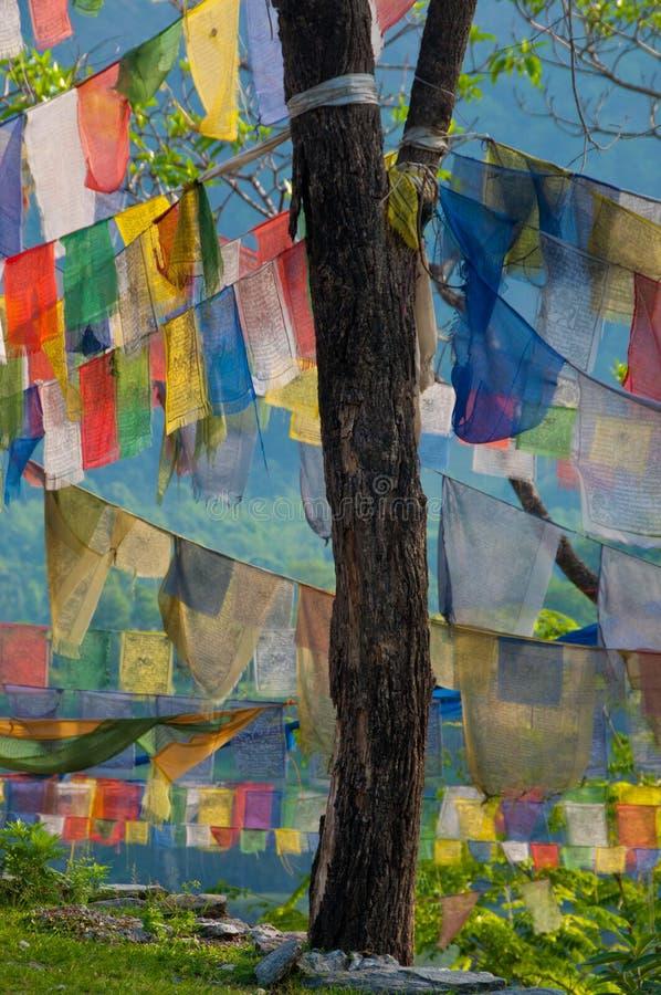 chorągwiany modlitewny drzewo obrazy stock