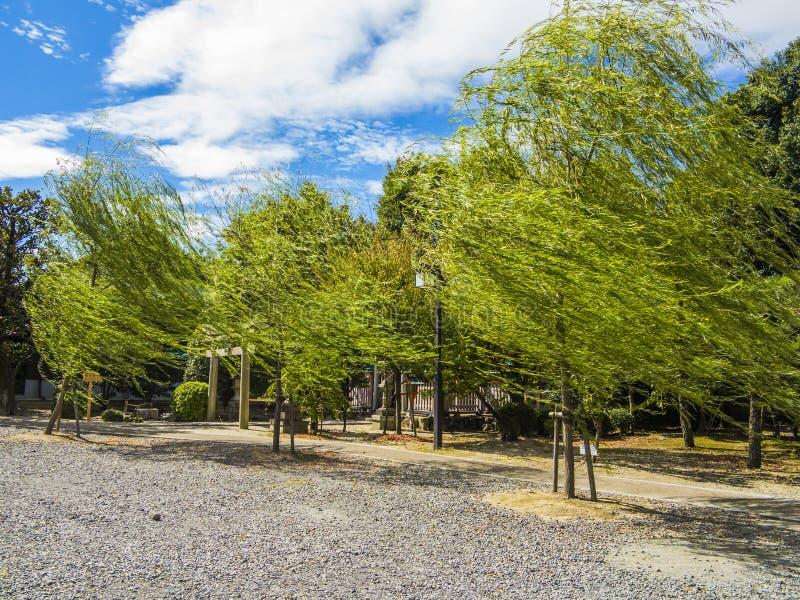 Chorando árvores de salgueiro fotos de stock royalty free