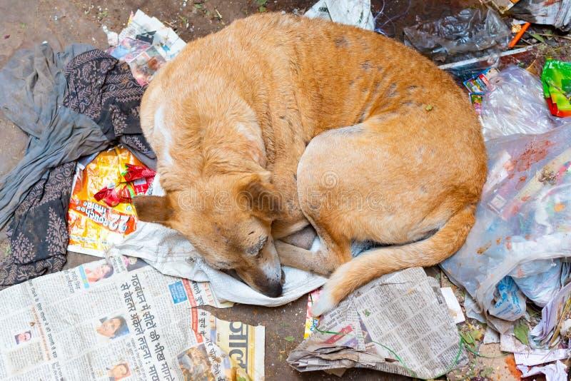 Choroba i biedny bezdomny b??dz?cy lub przyb??kany jeste?my prze?ladowanym dosypianie na pod?odze, Varanasi, India obraz royalty free
