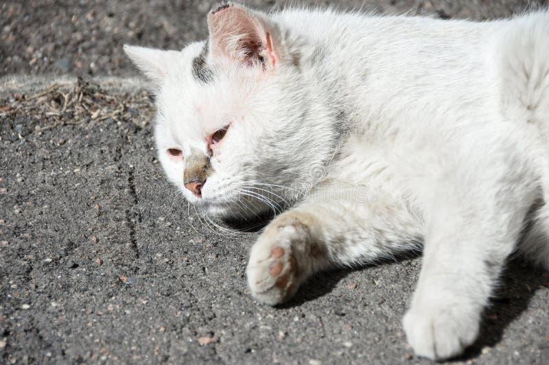 Chory bezdomny uliczny kot kłama na ulicie obraz stock