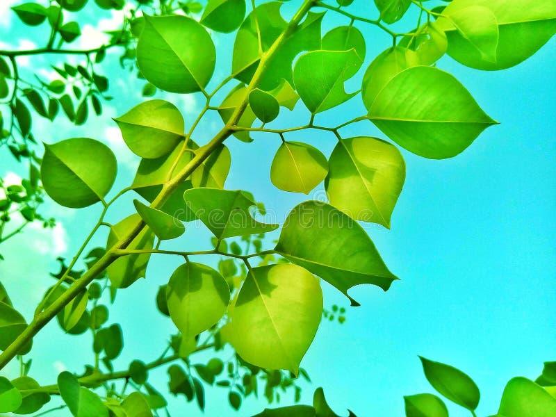 Choses de feuilles de vert les belles font images stock