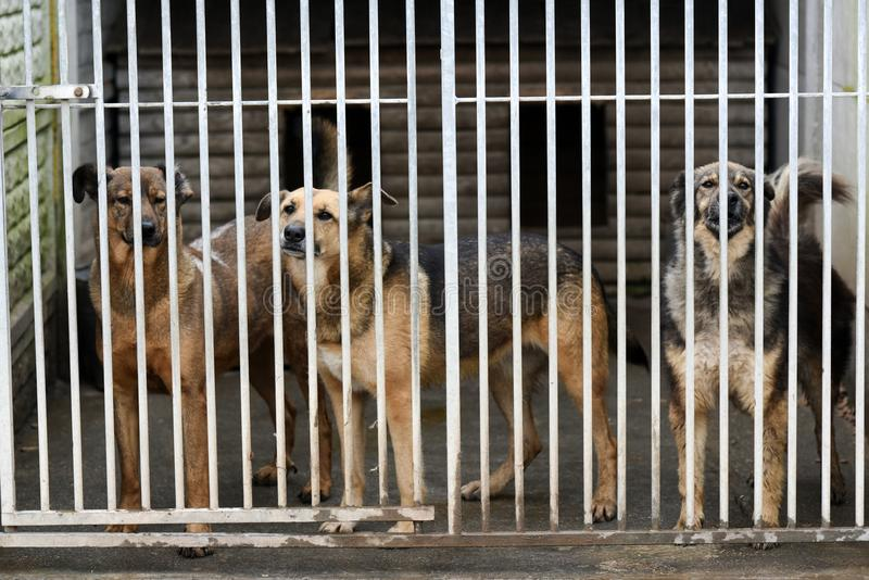 Choszczno, Польша, 12-ое ноября 2017: Собаки за решеткой в укрытии стоковые изображения
