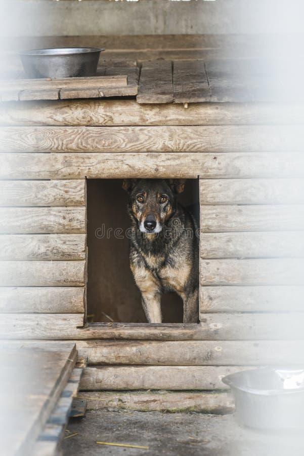 Choszczno, Polen, 12 november 2017: Hond in schuilplaats voor daklozen royalty-vrije stock fotografie