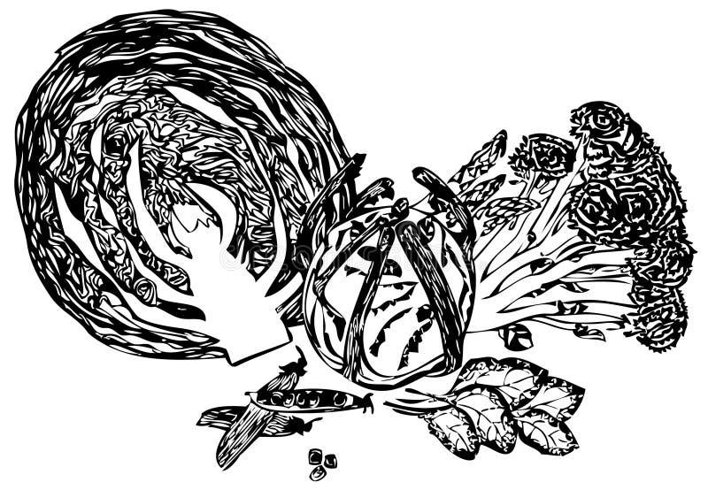 Chou illustration de vecteur