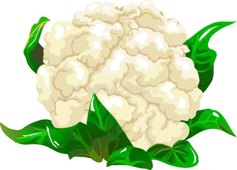 Chou-fleur illustration de vecteur