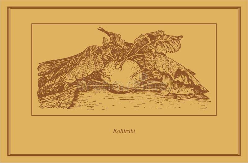 chou-rave illustration de vecteur