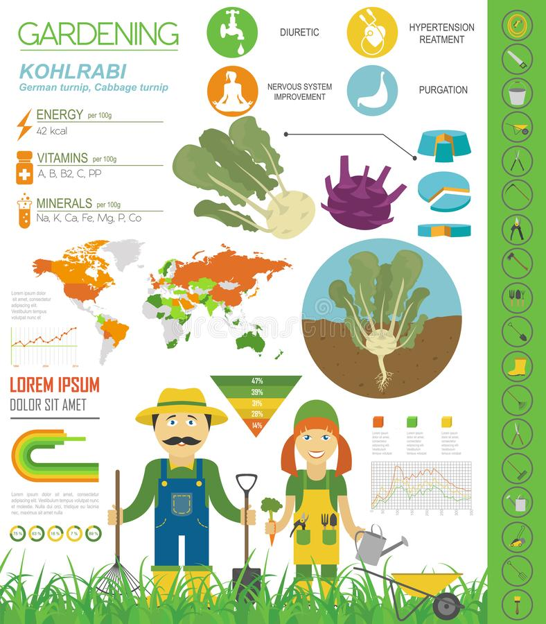 Chou-rave, calibre graphique de caractéristiques salutaires de navet de chou Jardinage, agriculture infographic, comment il se dé illustration libre de droits