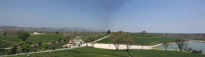 Choui Fong 1,000多rais茶园区域风景在土井美斯乐高山的在清莱,泰国Maechan  免版税图库摄影